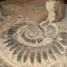 A large fossil in a research room at the Museum of Natural History
