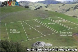 The plan for the original research area to test compost's carbon retention possibility on John Wick's Nicasio Native Grass Ranch in California..